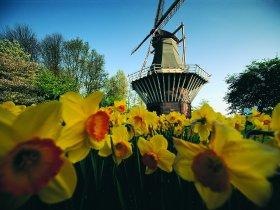 Windmill, Keukenhof - high rgb 229