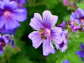 Auf zur LaGa - Blumenpracht im Schwarzwald!
