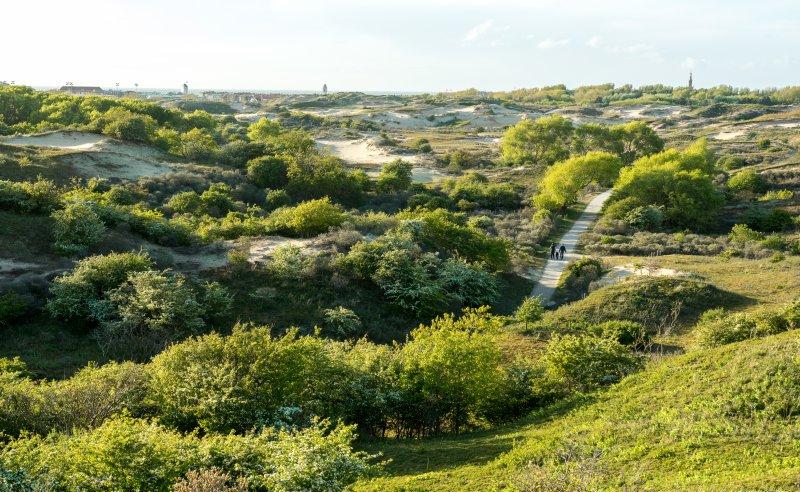 weite Dünenlandschaft in Nordholland