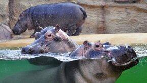 Hippodrom im Kölner Zoo c Kölner Zoo