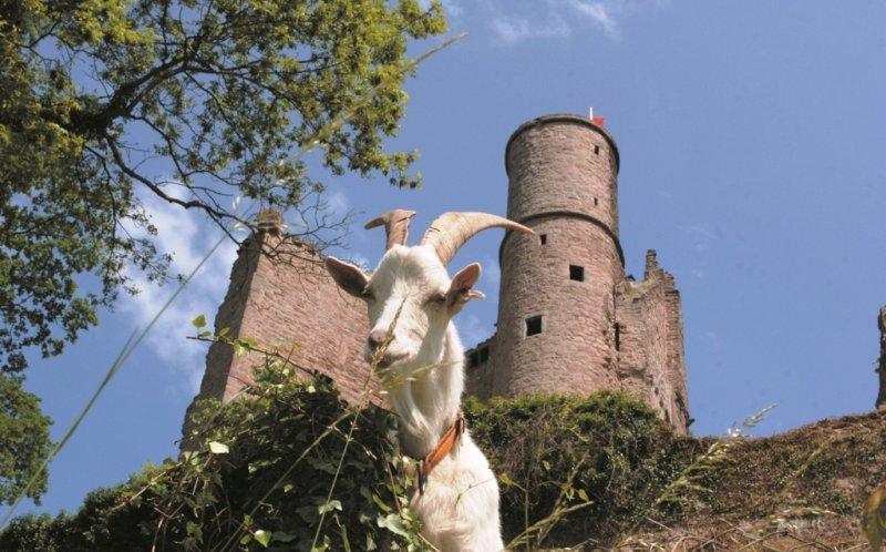Burg Hanstein Außenansicht