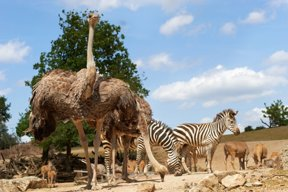 Tiere Afrikas in der Zoom Erlebniswelt Gelsenkirchen