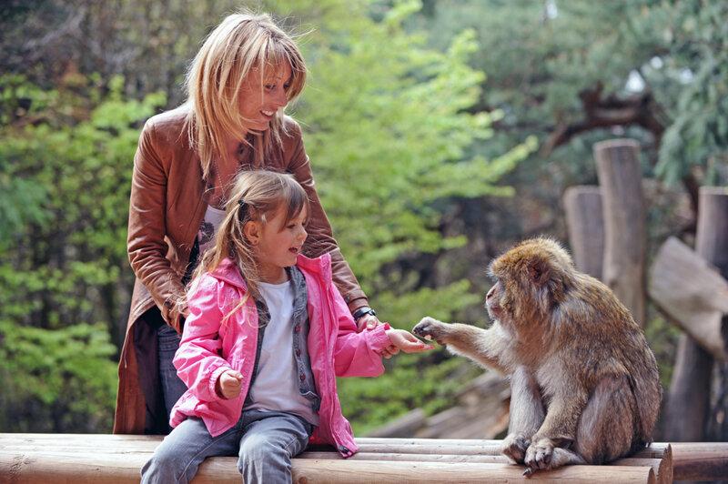 Mutter und Kind füttern einen Affen