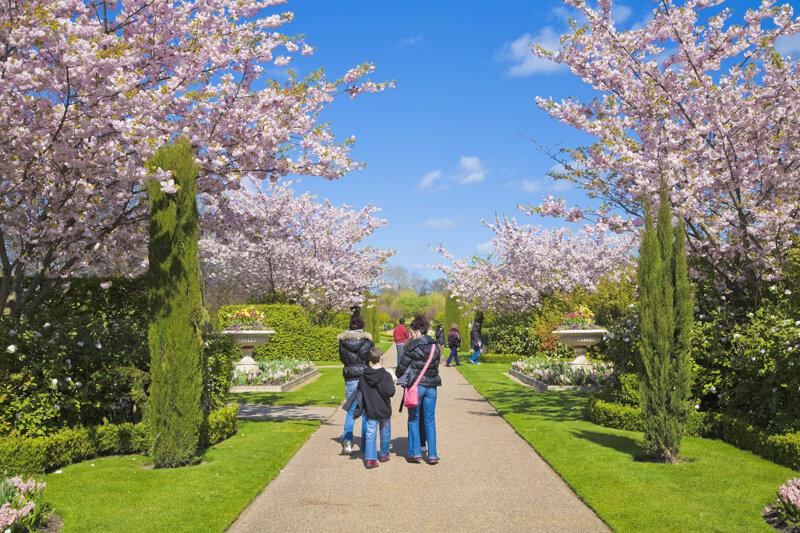 Regents Park - Kirschblüte