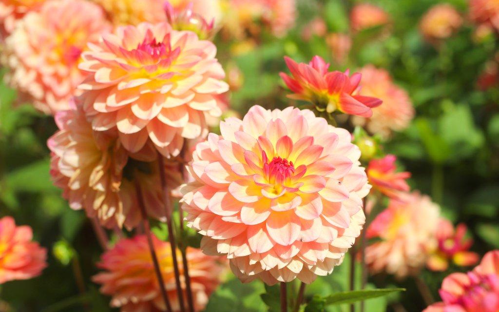 Blumen der Landesgartenschau