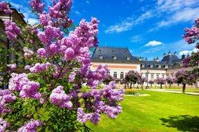 Schloss & Park Pillnitz Park c Schlösserland Sachsen
