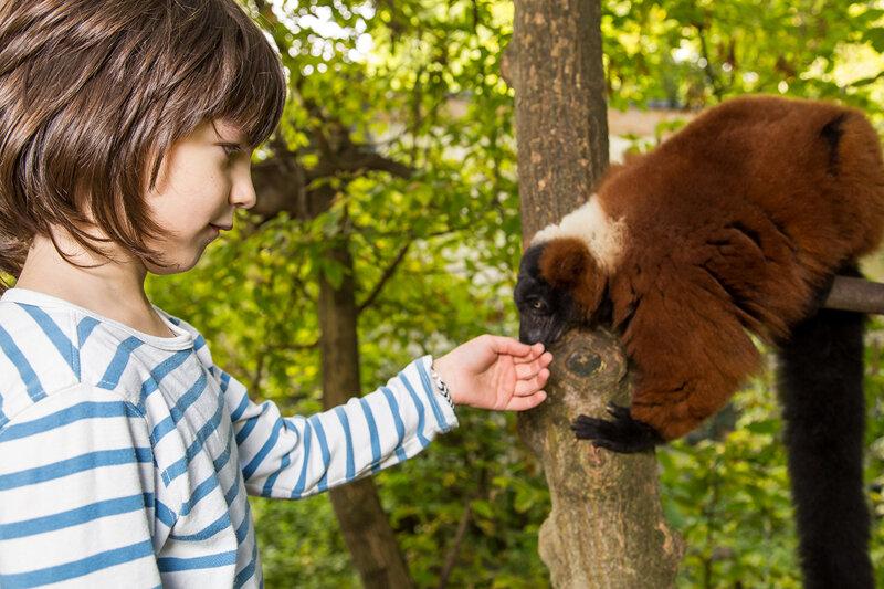 Junge im Tierpark Berlin beim Füttern von Lemuren