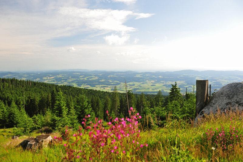 Luftaufnahme Bayerwald im Sommer
