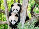 Wildes Wien - auf zum ältesten Zoo der Welt!