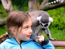 SERENGETI-PARK Affenwelt Katta gespiegelt
