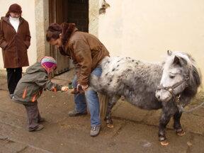 Ponny Pflege1