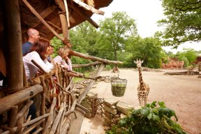Giraffe c Erlebnis-Zoo Hannover