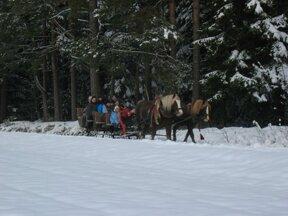 Pferdeschlitten3