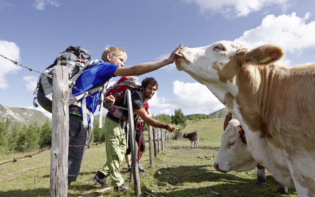 Kinder füttern eine Kuh