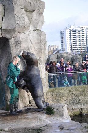 Fütterung (c) Zoo am Meer