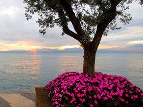 Baum mit Blumen c pixabay