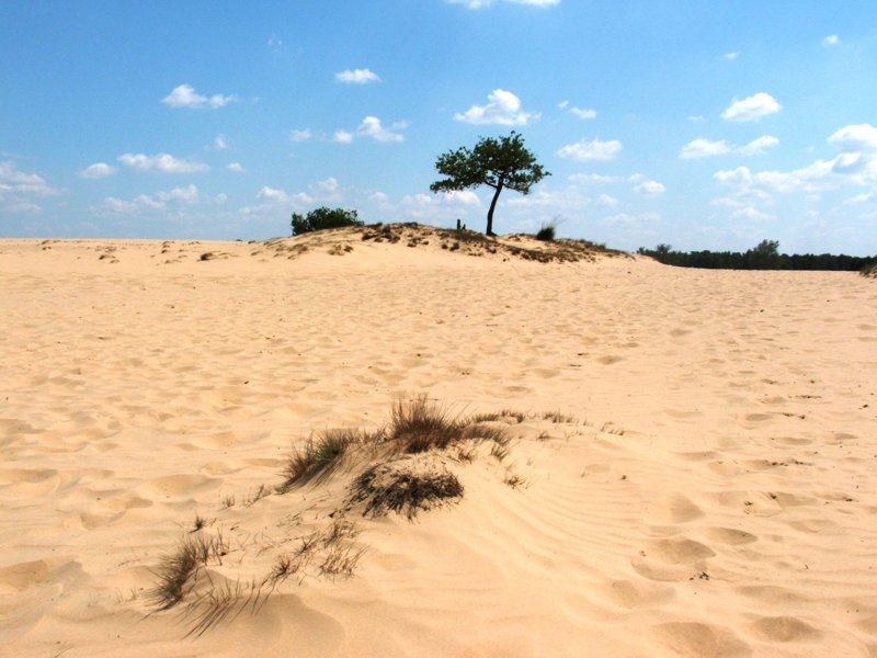 Nationalpark Loonse en Drunense Duinen