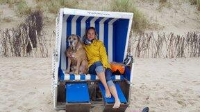 Hund Sylt Strandkorb