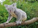 Dresden-Weekend mit Koala und Känguru