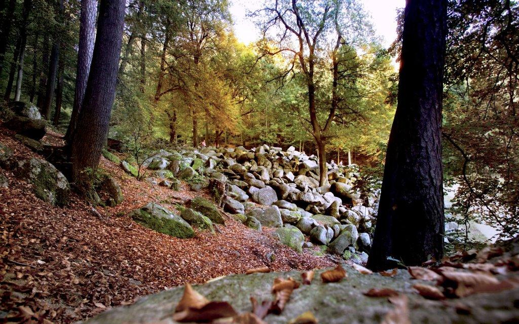 Felsen im Odenwald mit Bach und Bäumen