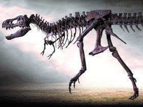 T. rex Rocky Dinosaurier Museum AltmÅhltal credit Harry Meister